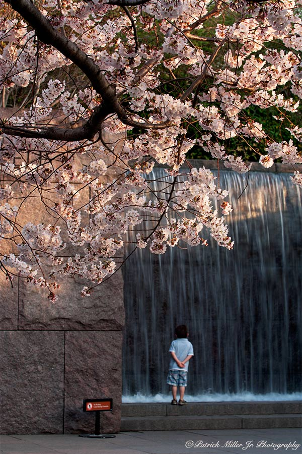 National Cherry Blossom Festival is a spring celebrations in Washington, DC
