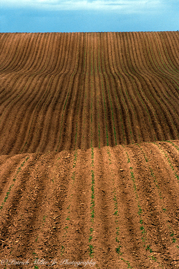 Seeded crop field in the rolling hills of Idaho