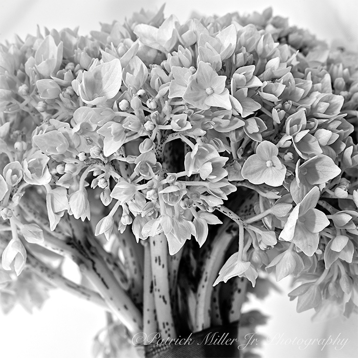 Product Photography Flowers in Black White CO