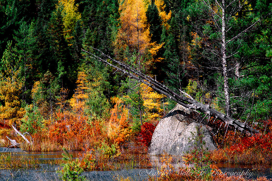 Colorful New England wetlands in Autumn