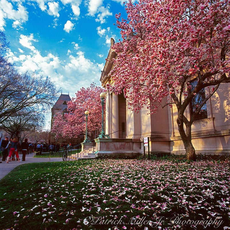 Spring on the campus of Brown University Providence Rhode Island
