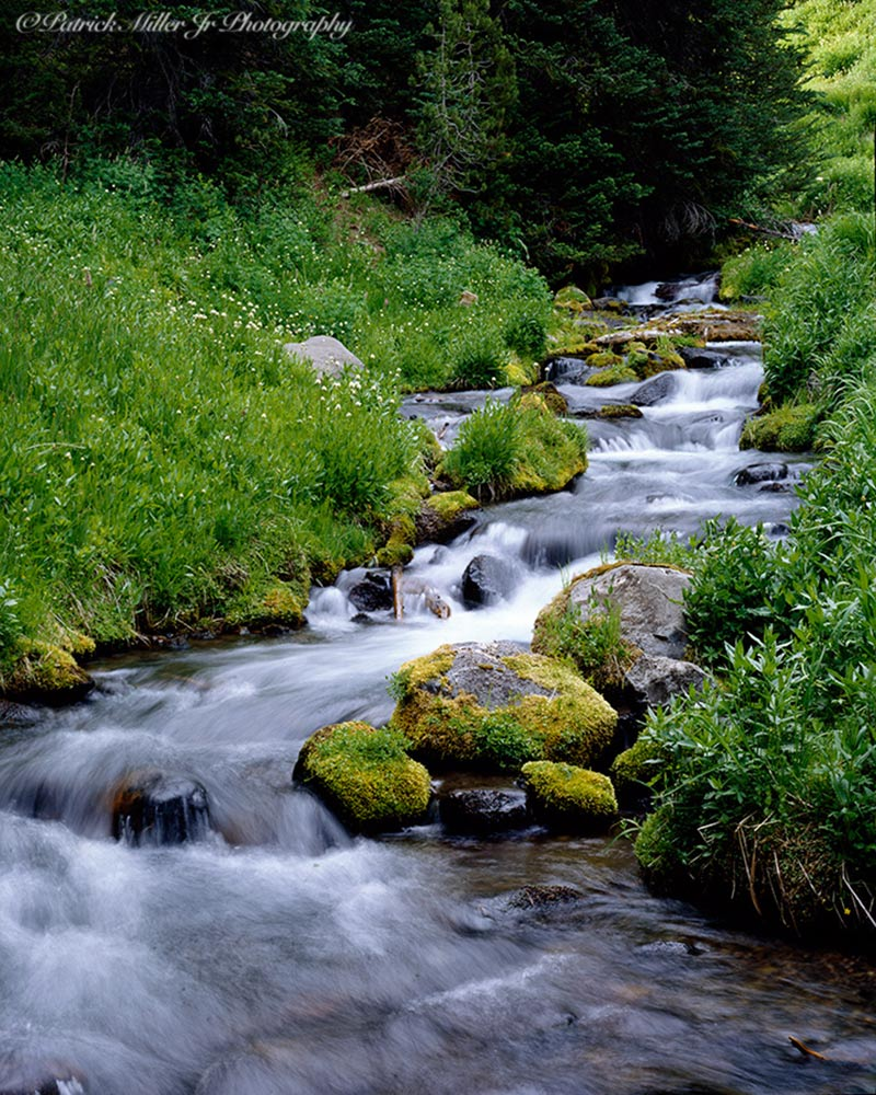 Trout stream with a fast current in a lush forest, Oregon